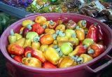 cashew fruits, Pindamonangaba, Brazil: