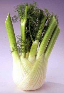 fresh fennel: