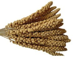 sprays of millet: