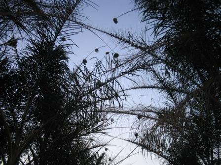 swallows: