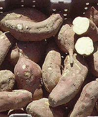 sweet potatoes: