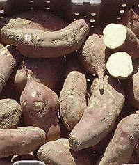 sweet potatoes: